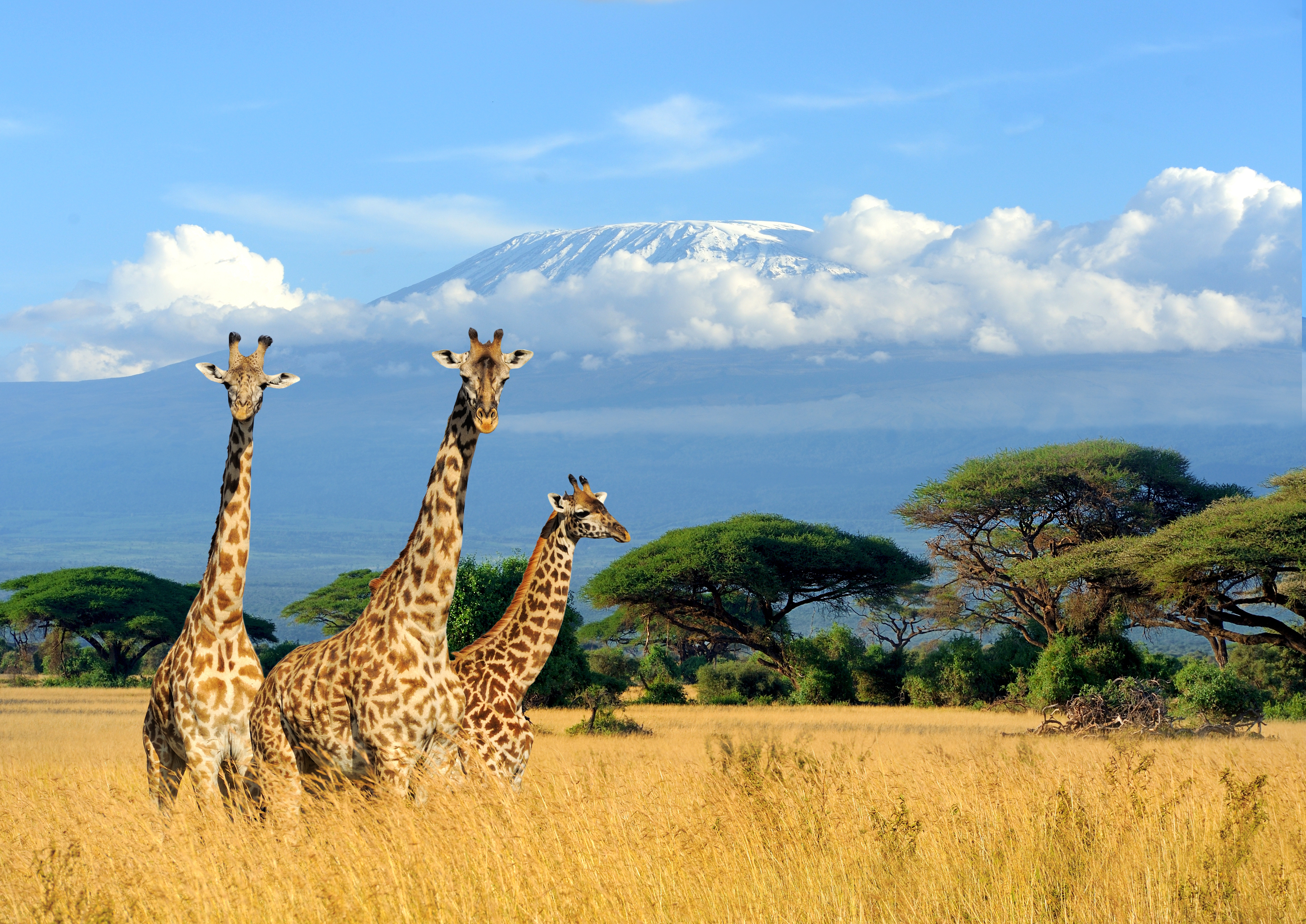 kenya travel guide cnn travel rh cnn com kenya map kenya moore