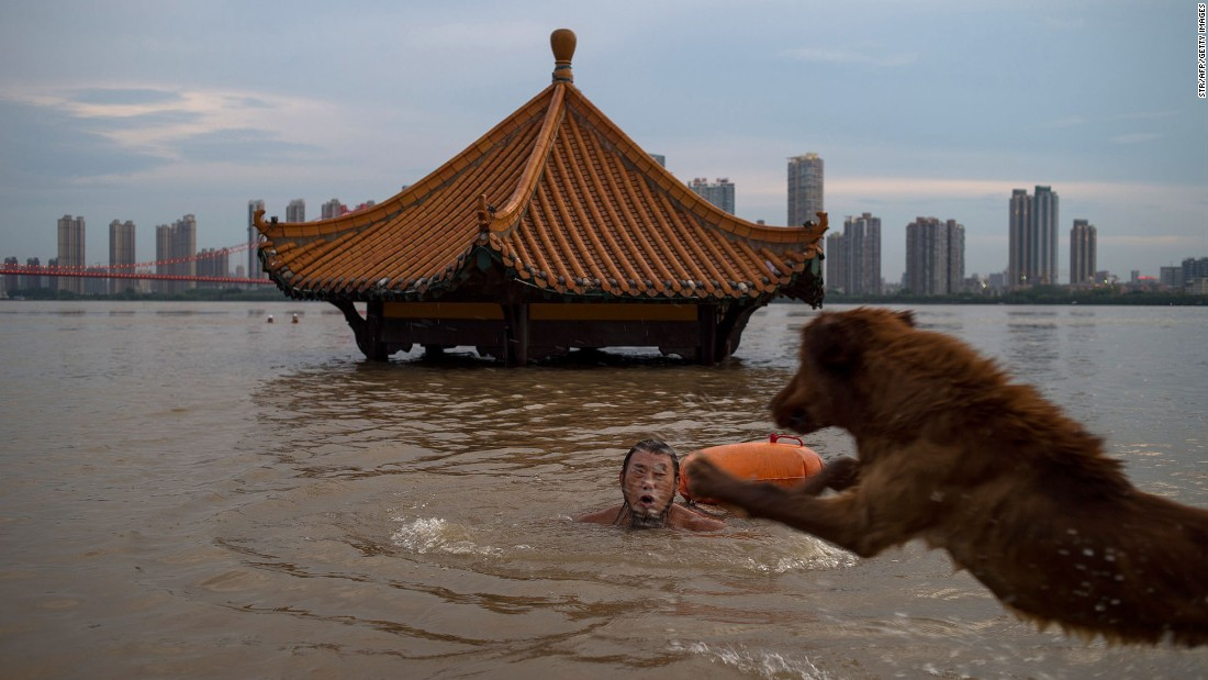A man in Wuhan, China, swims with his dog in the Yangtze river on Wednesday, July 5. Heavy rains in the province caused water levels to rise in several cities.
