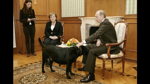"""Putin pets his dog Kuni as he addresses journalists with German Chancellor Angela Merkel in January 2007. Merkel, reportedly fearful of dogs since one attacked her in 1995, was photographed looking distinctly uncomfortable when Putin brought his large black Labrador into the meeting in Sochi, Russia. Years later, he told the German newspaper Bild he had no intention of intimidating Merkel. """"When I found out that she doesn't like dogs, of course I apologized,"""" he said."""