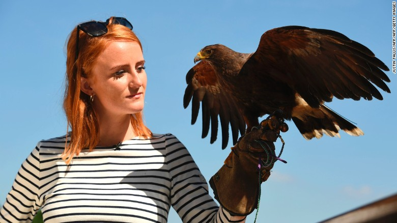 Rufus the Hawk rules roost at Wimbledon