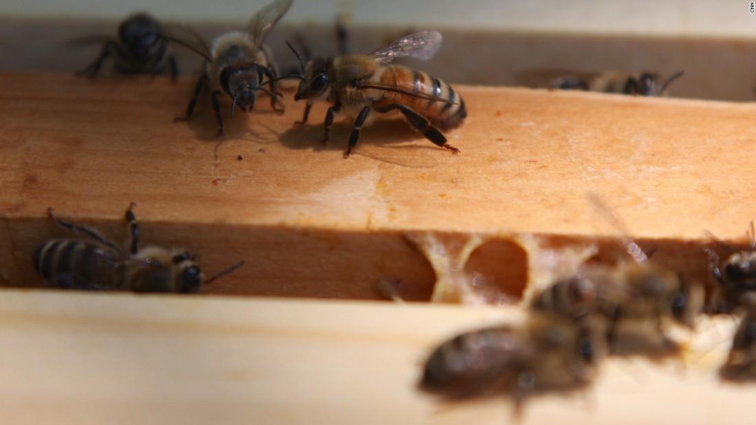 Honeybees hit by Trump budget cuts