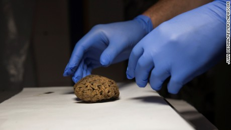 Fernando Serrulla, a forensic anthropologist of the Aranzadi Science Society, prepares to show one of the 45 brains