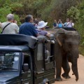 Sri Lanka elephant tourists