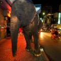 Bangkok elephant city