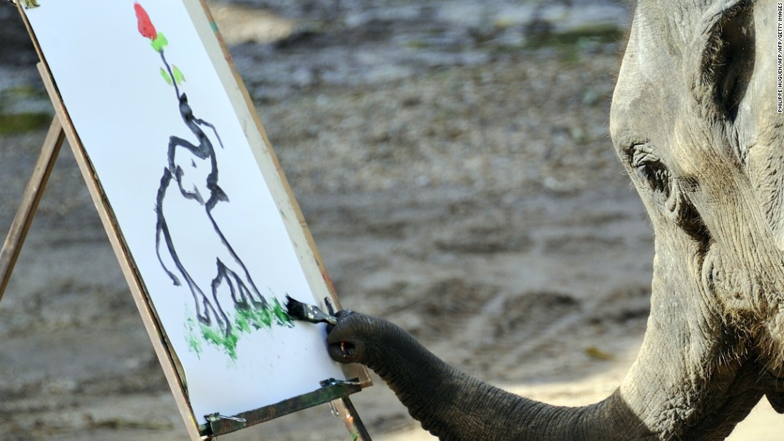 At the Maetaman Elephant camp in Chiang Mai, northern Thailand,  an elephant paints during a performance for tourists.