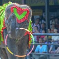 Elephants pattaya circus