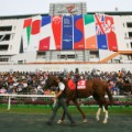 horseracing south korea seoul racecourse happy ville parade ring