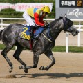 horseracing south korea seoul racecourse moon se young ytn cup