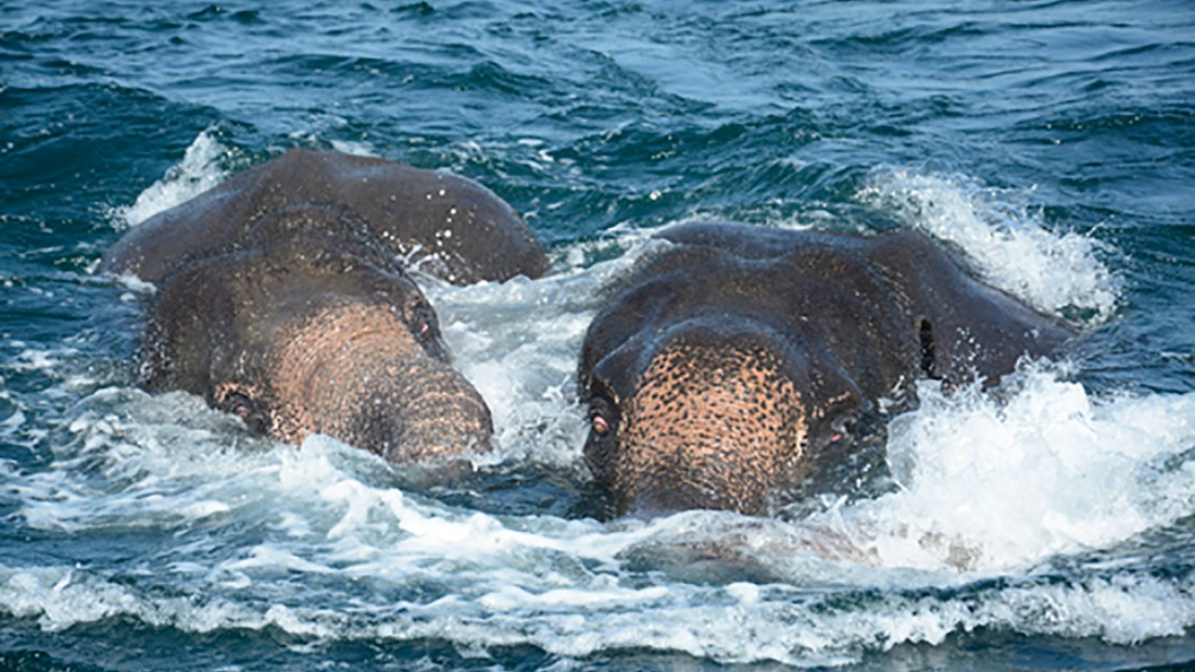 9f57718c17803 Trunks not made for swimming  Elephants rescued from Sri Lankan sea - CNN
