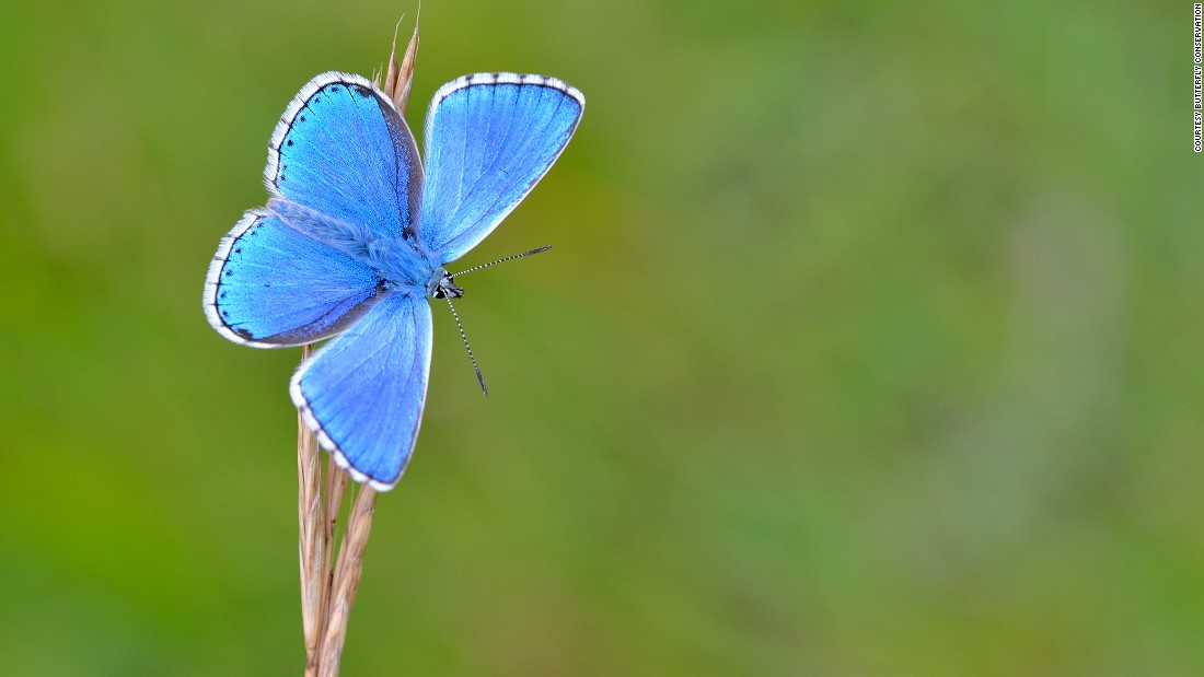 According to Butterfly Conservation, restoring butterfly populations in gardens, urban green spaces and the countryside can bring substantial benefits to several other species and improve the health, wealth and well-being of the human population.