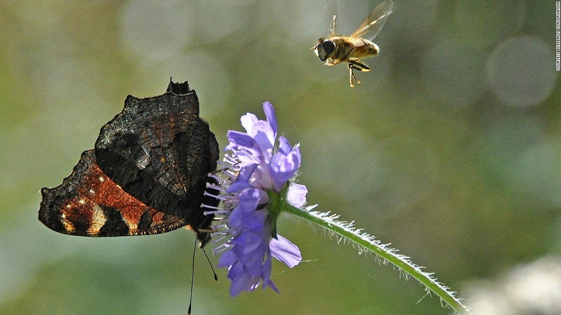 """Brighton is a really good place to do butterfly havens because we are on chalk, and there's a whole range of butterflies that feed on plants that grow on it,"" says butterfly conservationist Dan Danahar."