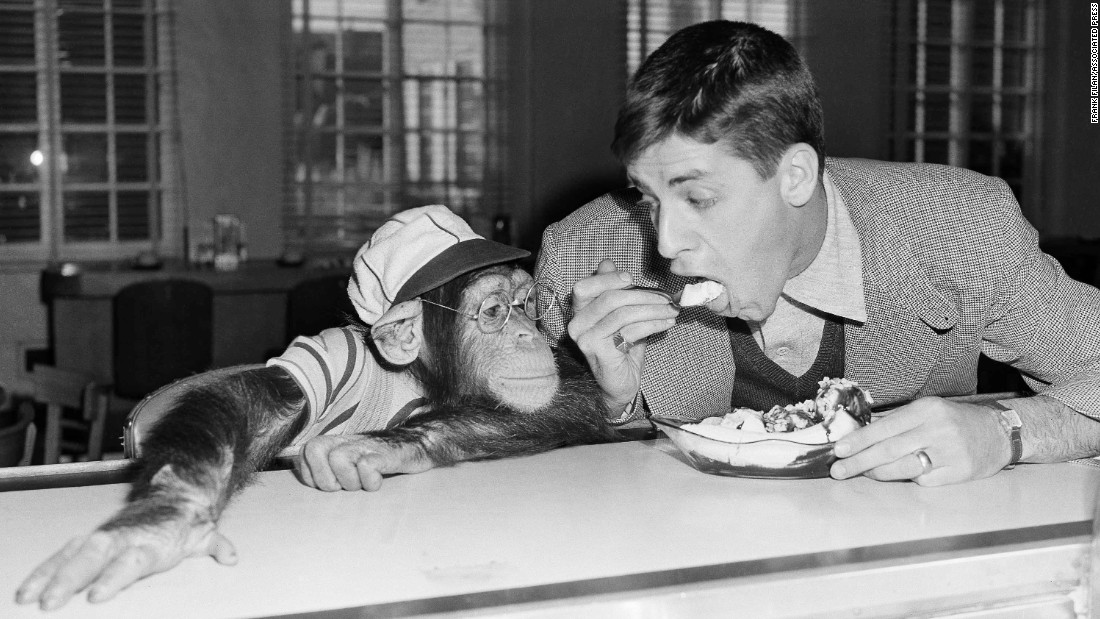Lewis monkeys around with Pierre, a 5-year-old chimpanzee, in 1950, during Lewis' early Hollywood days.