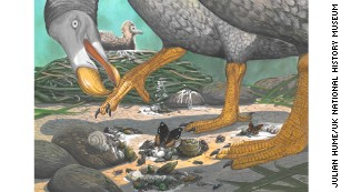 What you didn't know about the dodo