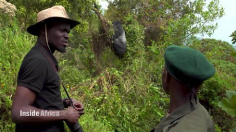 Inside Africa Blogger Solomon Oleny goes walking with silverbacks C_00045006