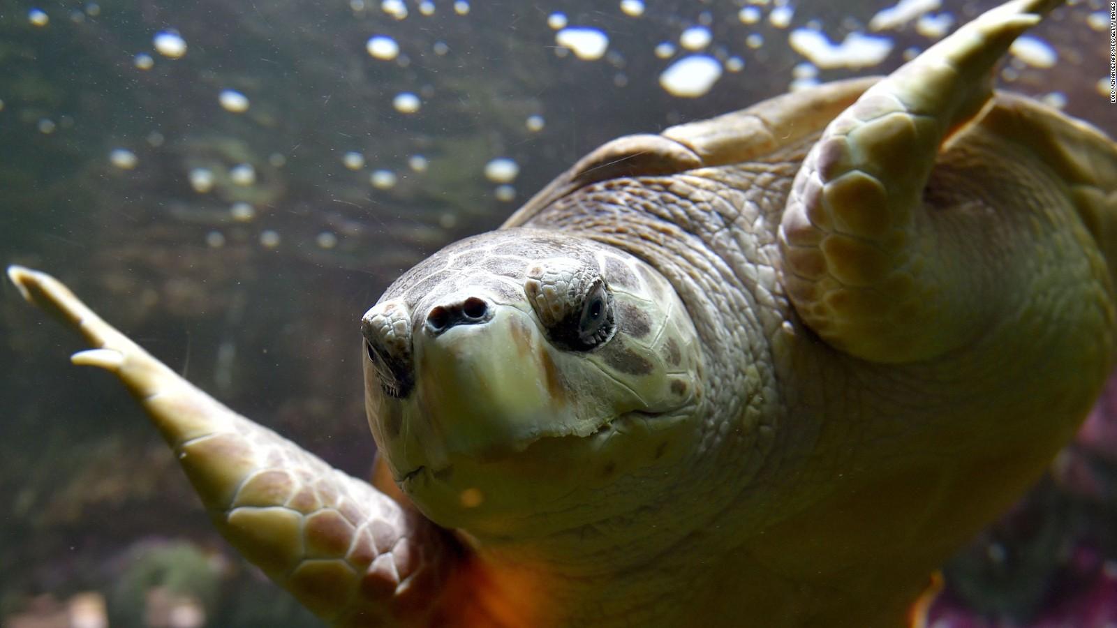 Will China's Hainan Island again host rare sea turtles