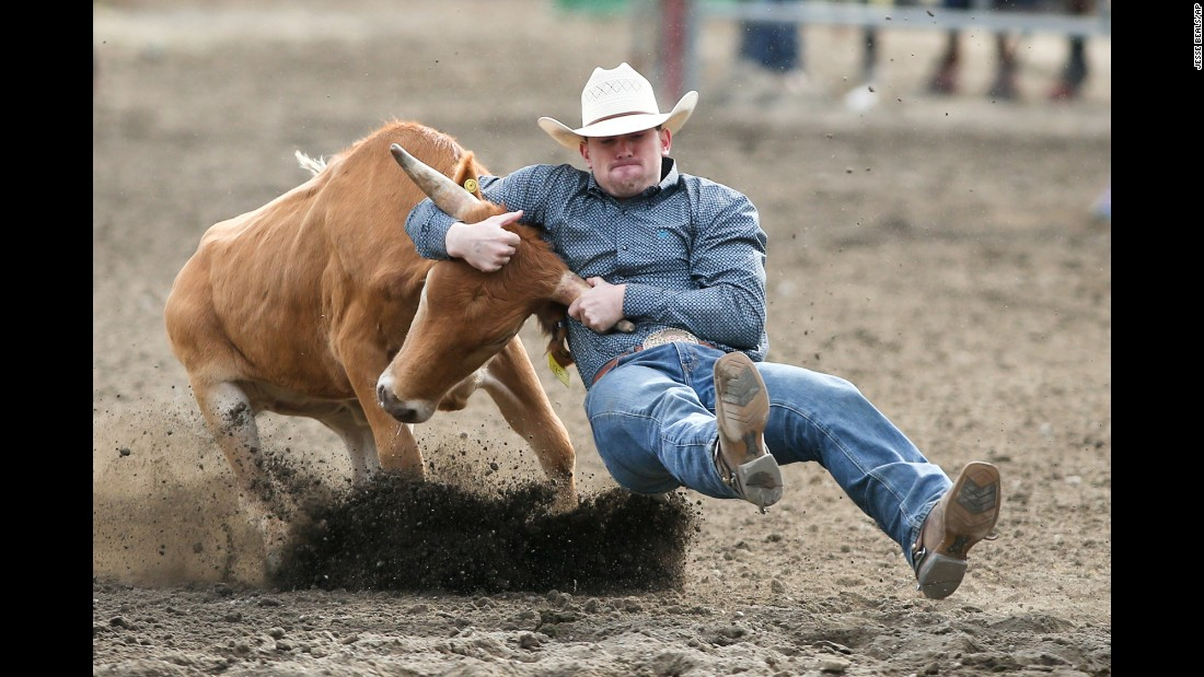 Taylor Gregg wrestles a steer during a rodeo event in Bremerton, Washington, on Friday, August 25.