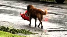 Photo Of Dog Carrying Bag Food Goes Viral