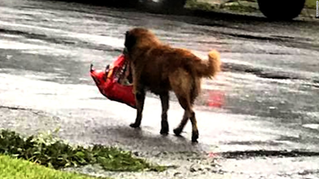 Video Of Dog Carrying Food Bag