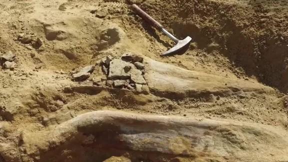 dinosaur fossil colorado jnd orig vstan_00003724.jpg