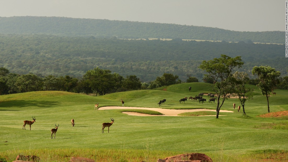 "Wildlife often finds its way onto golf courses in South Africa. Impala and water buffalo are seen roaming across the 7th hole of the <a href=""http://edition.cnn.com/2017/09/19/golf/gallery/golf-course-wildlife-africa/index.html"">Legend Golf Course on the Entabeni Safari Reserve</a>."