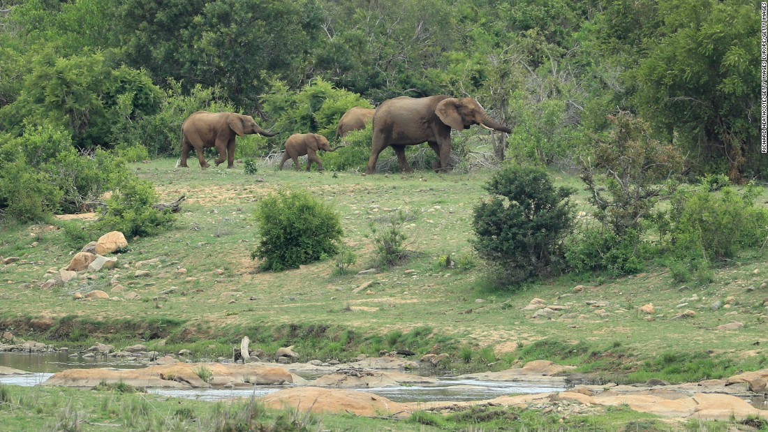 A family of elephants are pictured on the Kruger National Park alongside Leopard Creek Country Golf Club in Malelane, South Africa.