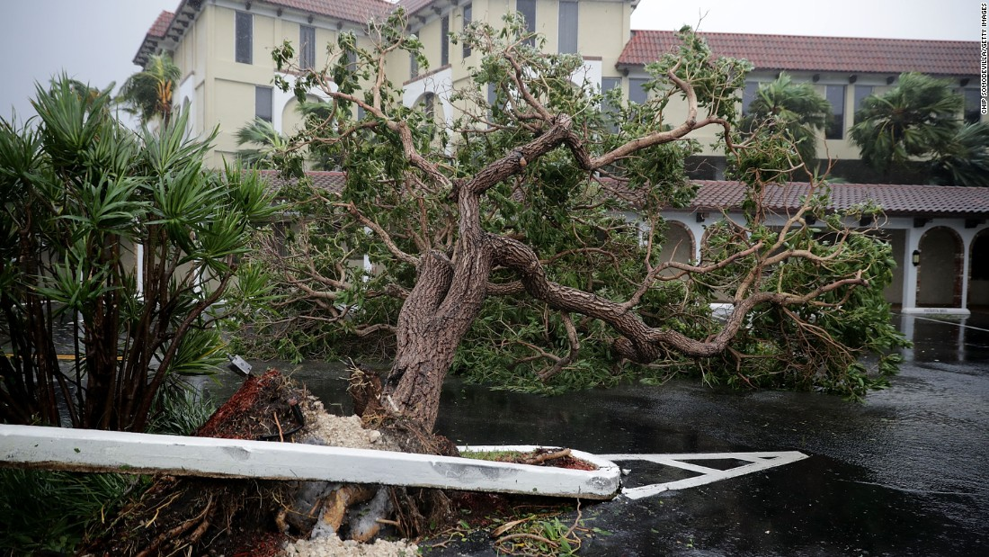Fallen trees block a parking lot in Fort Lauderdale on September 10.