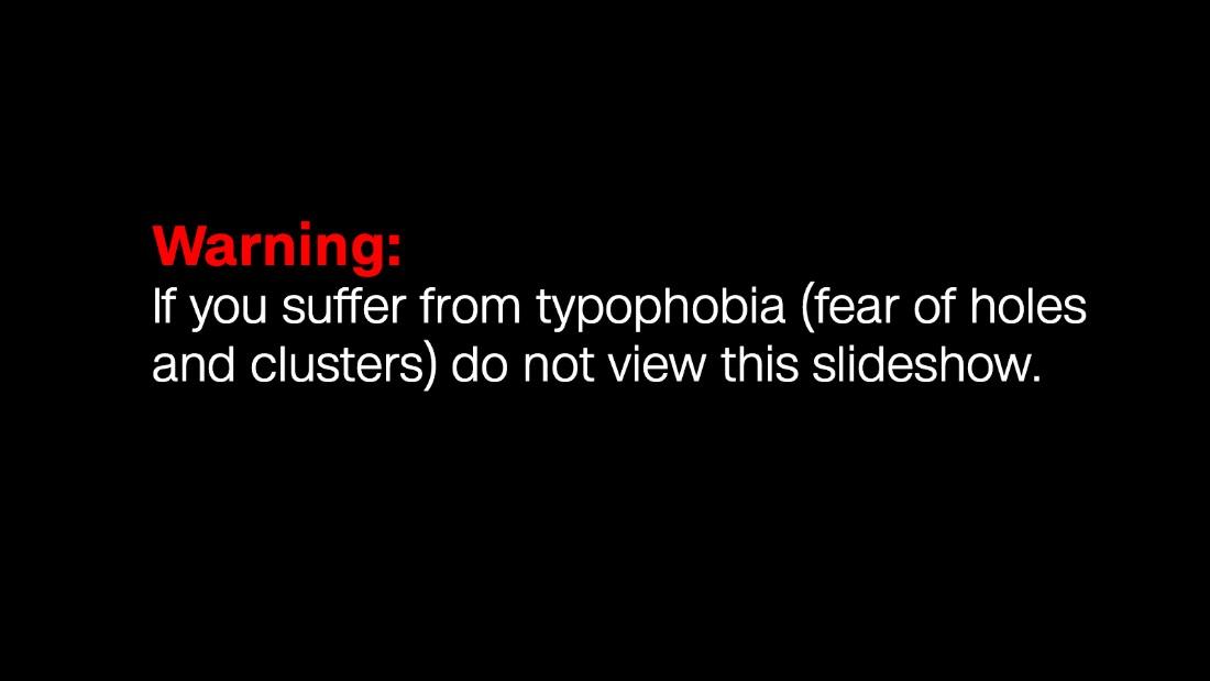 phobia of black people