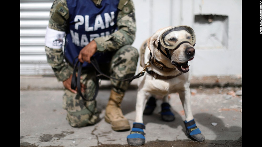 "A member of the Mexican Navy kneels next to a rescue dog as they work near <a href=""http://www.cnn.com/2017/09/08/americas/gallery/mexico-earthquake-2017/index.html"" target=""_blank"">earthquake damage</a> in Juchitan, Mexico, on Sunday, September 10."