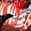 cologne arsenal dog