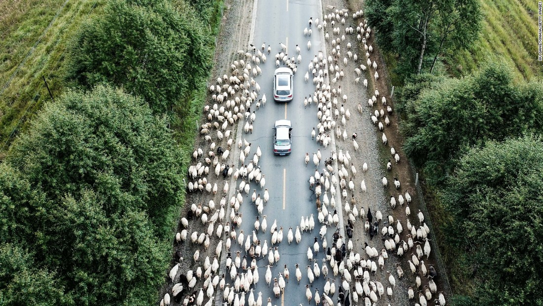 <strong>Guinan, China: </strong>Sheep are herded along a roadway in Guinan County, in northwest China's Qinghai Province. September is an annual migration time for the animals in Guinan.