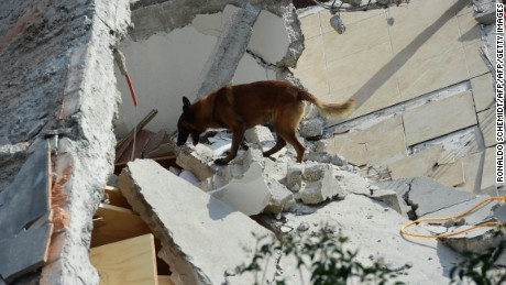 Rescuers with a sniffer dog search for survivors buried under the rubble and debris of a building flattened by a 7.1-magnitude quake in Mexico City on September 19, 2017. The number of people killed in a devastating earthquake that struck Mexico City and nearby regions on Tuesday has risen to 138, the government said. / AFP PHOTO / RONALDO SCHEMIDT        (Photo credit should read RONALDO SCHEMIDT/AFP/Getty Images)