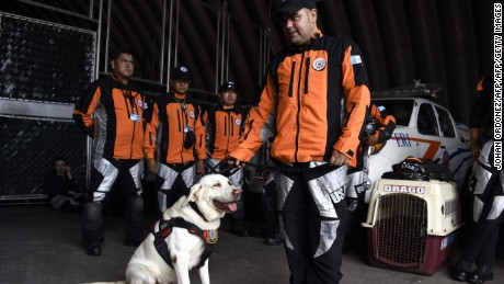 Drago a rescue dog waits with a 47-member group from Guatemala's Search and Rescue team as they get ready at the civil protection headquarters in Guatemala City on September 21, 2017, before heading to Mexico to assist in the humanitarian effort two days after the major earthquake that left more than 230 people dead. / AFP PHOTO / JOHAN ORDONEZJOHAN ORDONEZ/AFP/Getty Images