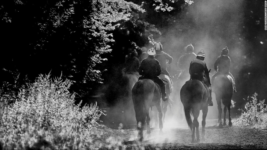 With Royal Ascot approaching, horses return though the woods after working on the Warren Hill gallops at Newmarket.