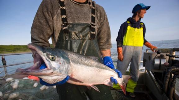 Driftnet fishing for sockeye salmon along the Nushagak River.