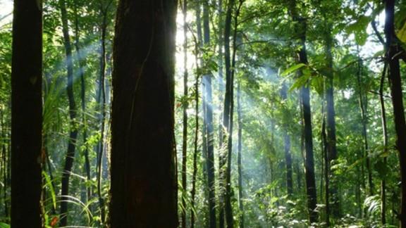 The rainforest on Vangunu Island.