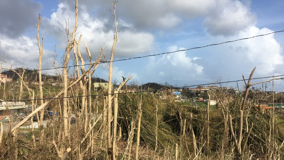 The lush landscape of Puerto Rico was blown away by Maria.
