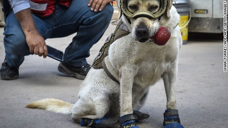 Frida, a rescue dog belonging to the Mexican Navy, with her handler Israel Arauz Salinas, takes a break while participating in the effort to look for people trapped at the Rebsamen school in Mexico City, on September 22, 2017, three days after the devastating earthquake that hit central Mexico. / AFP PHOTO / OMAR TORRESOMAR TORRES/AFP/Getty Images