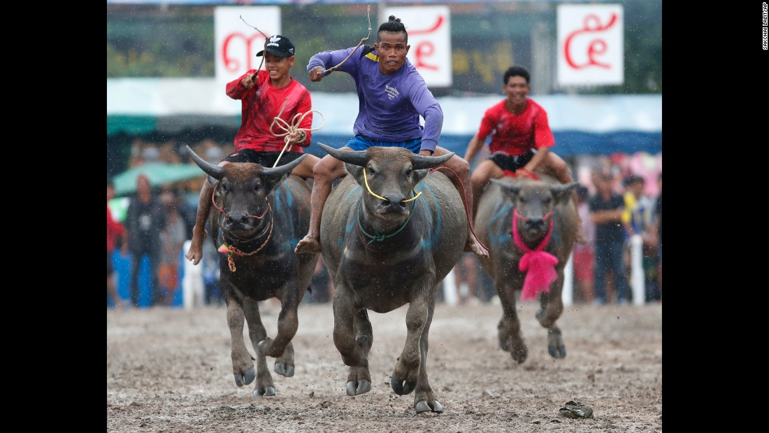 Jockeys compete during the annual water buffalo race in Chonburi Province, south of Bangkok, Thailand, on Wednesday, October 4.