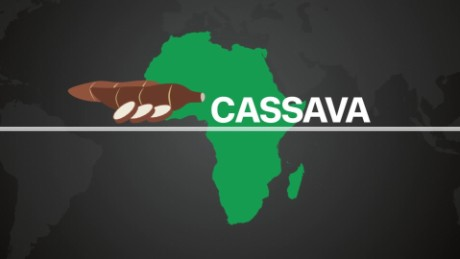 Cassava Production and Consumption in Africa_00000806.jpg