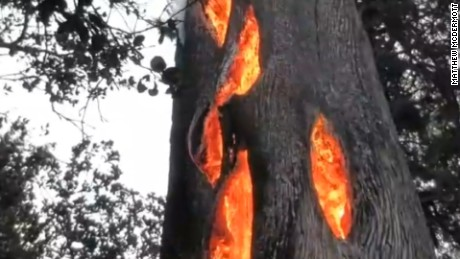 Watch as fire burns inside hollow tree