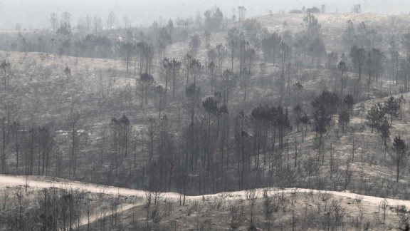 The remains of a forest destroyed by a wildfire in Vieira de Leiria, Marinha Grande, in central Portugal