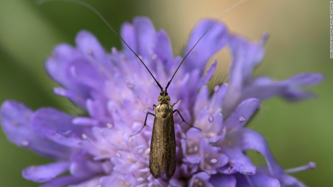 New study suggests insect populations have declined by 75% over 3 decades - CNN