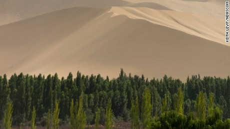 Since the 1970s, China has planted billions of trees in an effort to hold back the encroaching Gobi Desert. The swathe of forest is known as the Great Green Wall.
