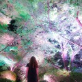 teamlab japan cherry blossoms