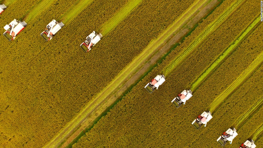 <strong>Xinghua, China:</strong> Farmers harvest rice crops using combines in eastern Jiangsu province.