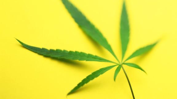 Hemp leaf (Cannabis sativa) against yellow background (defocussed)