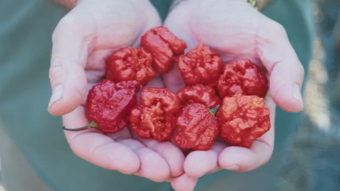Brain Effects Of 'hottest Pepper In The World' Set Human In Hospital