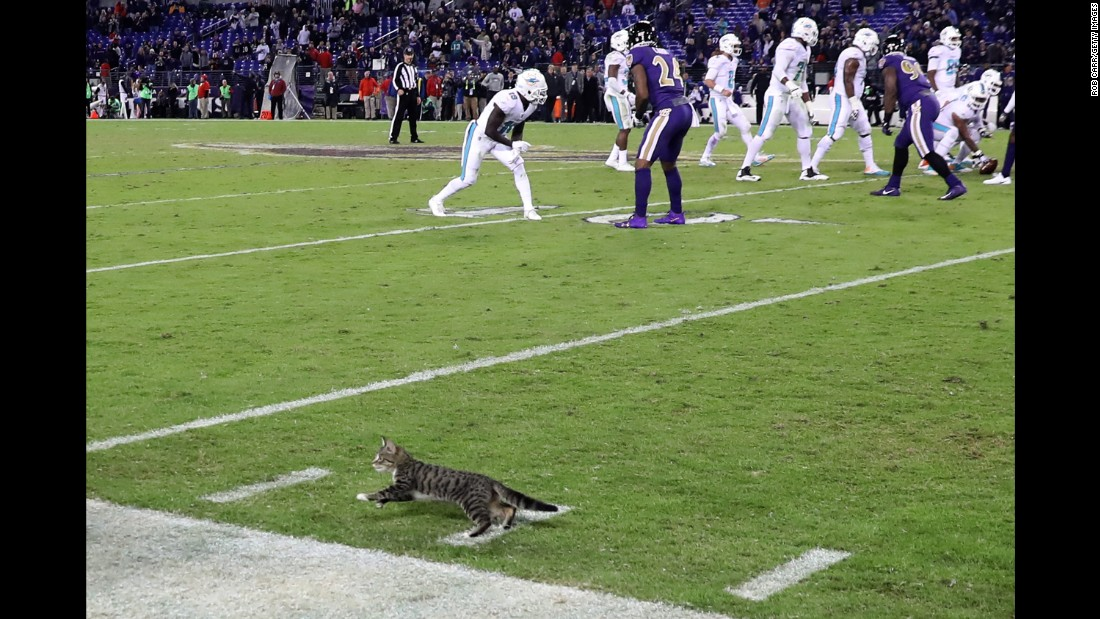"A stray cat runs onto the field during an NFL game in Baltimore on Thursday, October 26. The cat <a href=""http://www.baltimoreravens.com/news/article-1/The-Caw-Heres-What-Happened-to-the-Thursday-Night-Football-Cat/ace8d191-20f7-4e74-a409-1a81b9803f61"" target=""_blank"">was later adopted</a> by a stadium employee, according to the Baltimore Ravens."