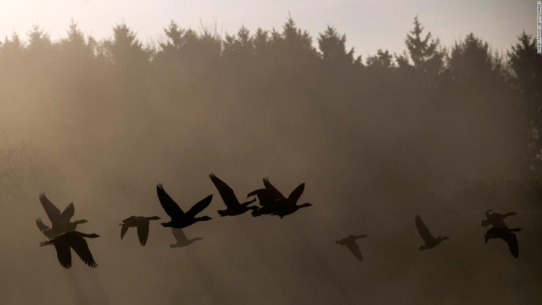 Geese fly through early morning mist in Sundridge, England, on Thursday, November 2.