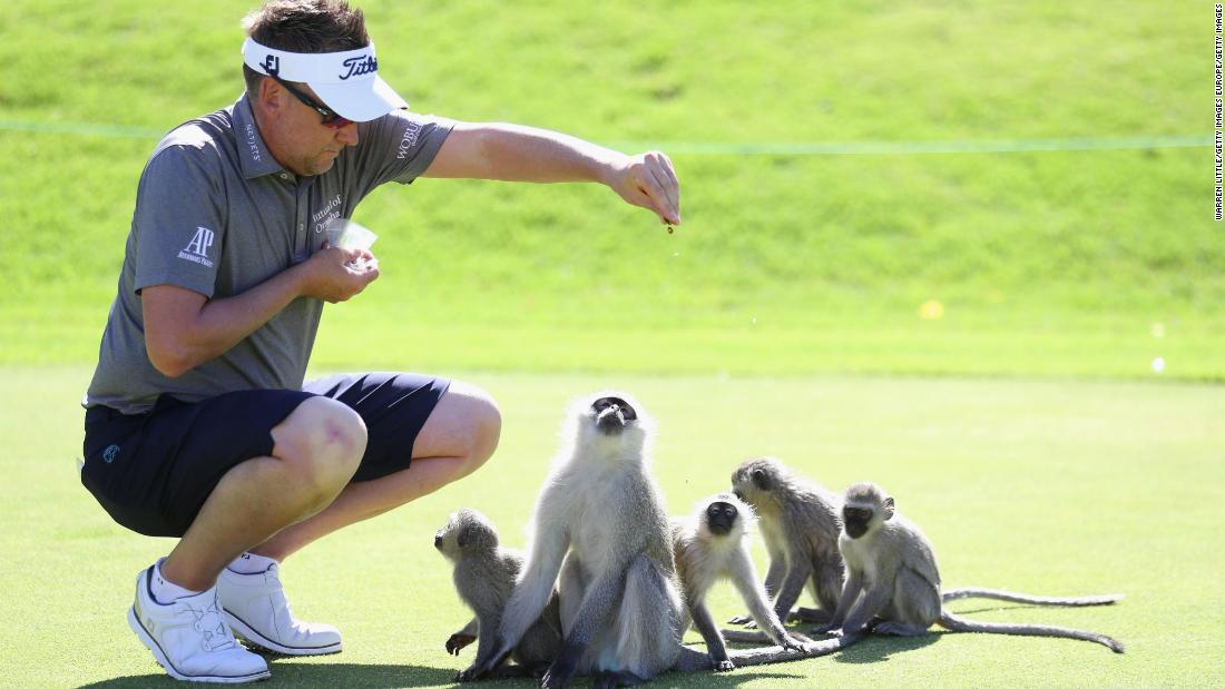 Ahead of the tournament which starts Thursday, the Englishman was visited by some monkeys on the greens, and he took time out from his practice round to feed them.